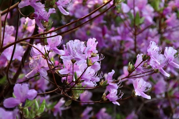 山は春 賑やかに_e0048413_17264681.jpg