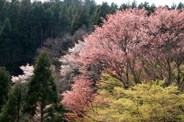 山は春 賑やかに_e0048413_17271306.jpg
