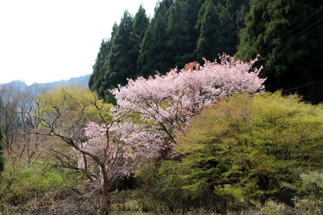 山は春 賑やかに_e0048413_17271823.jpg