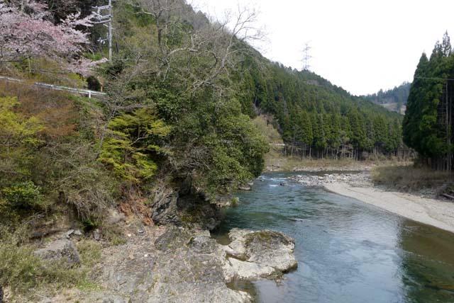 山は春 賑やかに_e0048413_17273937.jpg