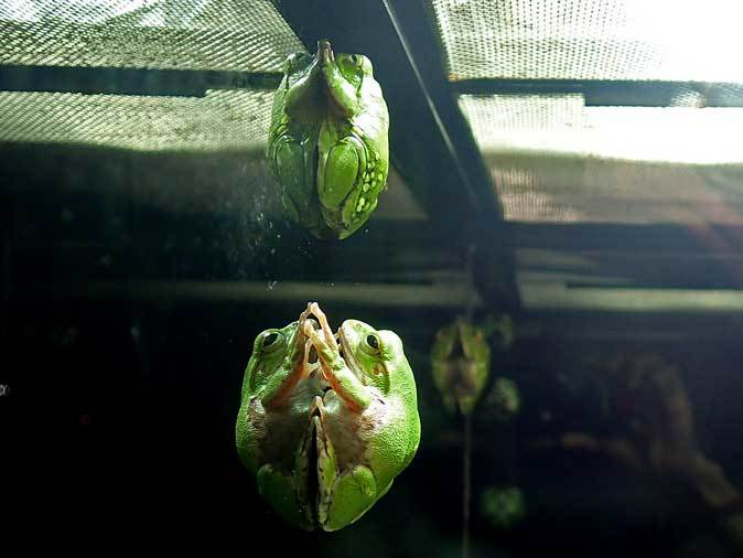 上野動物園:両生爬虫類館だより~何のたまご?(May 2019)_b0355317_21124313.jpg