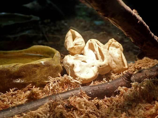 上野動物園:両生爬虫類館だより~何のたまご?(May 2019)_b0355317_21152843.jpg