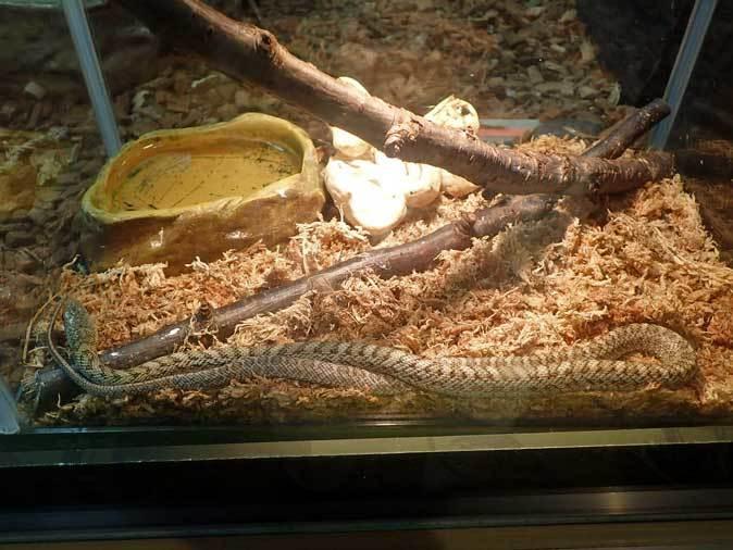 上野動物園:両生爬虫類館だより~何のたまご?(May 2019)_b0355317_21155685.jpg