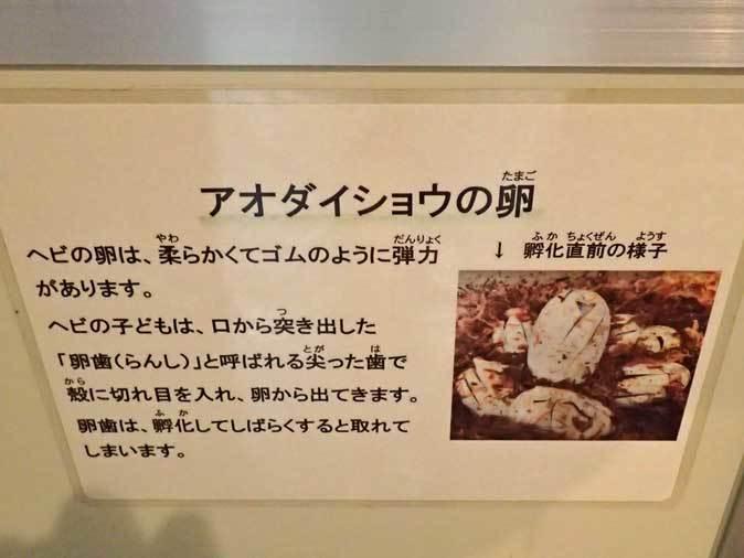 上野動物園:両生爬虫類館だより~何のたまご?(May 2019)_b0355317_22121681.jpg