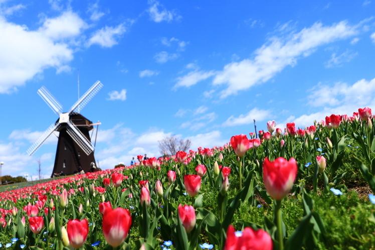 春の鶴見緑地_f0209122_09233794.jpg