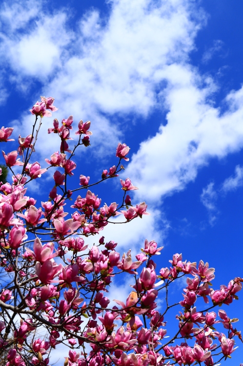 春の鶴見緑地_f0209122_09242191.jpg