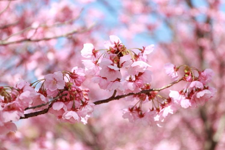 春の鶴見緑地_f0209122_09250762.jpg