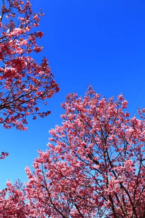 春の鶴見緑地_f0209122_09252628.jpg