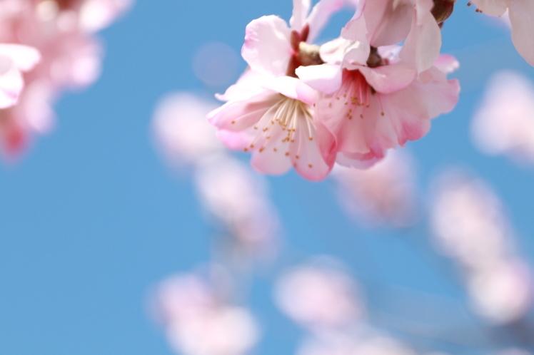 春の鶴見緑地_f0209122_09254226.jpg