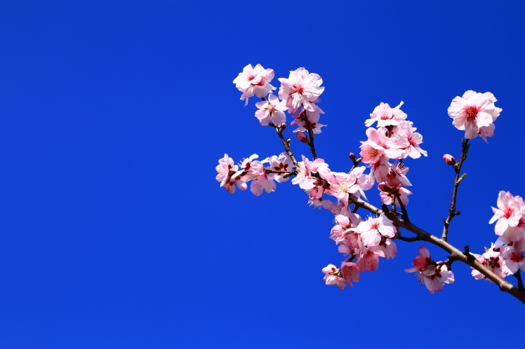 春の鶴見緑地_f0209122_09255874.jpg