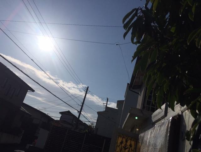 FabGarden 七分袖Tシャツ 『鎌倉の紫陽花とラピスラズリで染めました』_d0108933_18392043.jpg