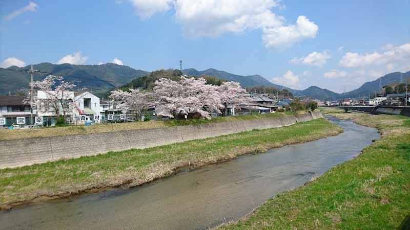 和束の桜_b0202651_20415397.jpg