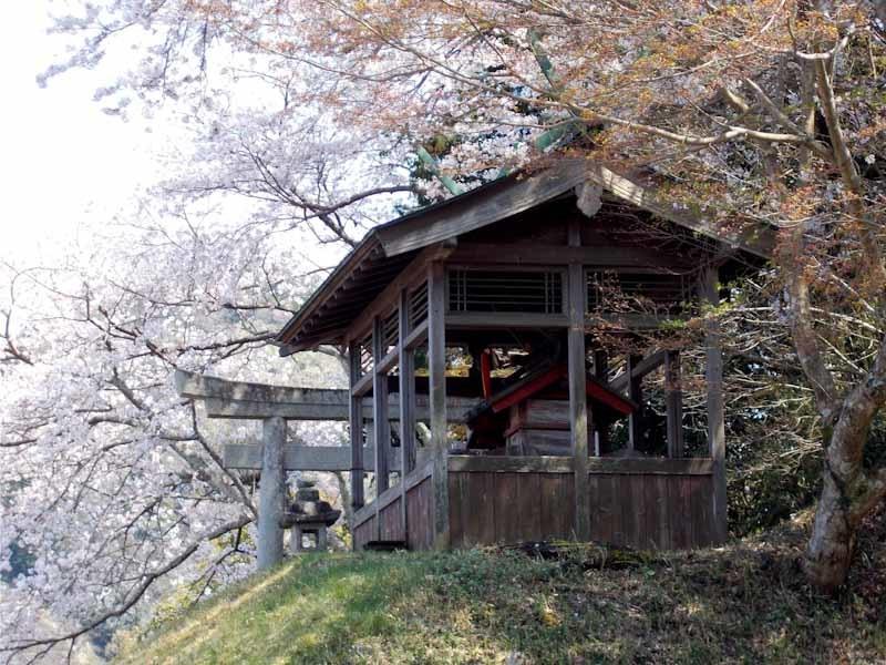 和束の桜_b0202651_20435914.jpg