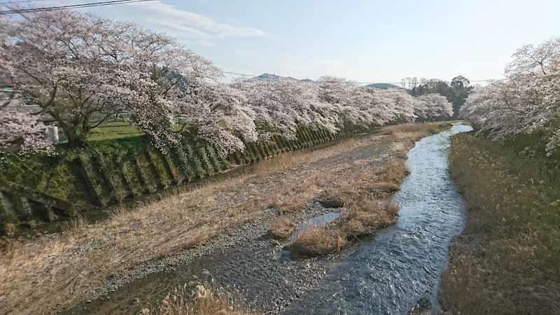 和束の桜_b0202651_20452779.jpg