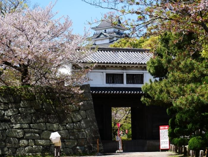 三分葉桜の和歌山城公園  2020-04-19 00:00   _b0093754_22533925.jpg