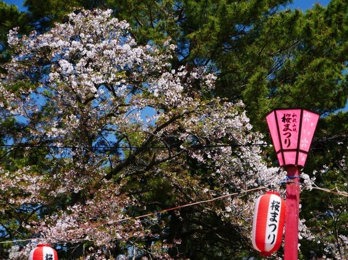 三分葉桜の和歌山城公園  2020-04-19 00:00   _b0093754_22554232.jpg