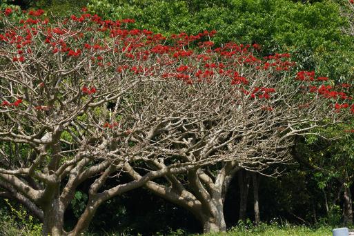 ヤンバルの森でアカヒゲさんと。。_b0346055_20453699.jpg
