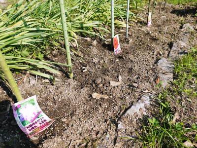 令和2年の『ダリアの球根』販売スタート!!独占販売や希少品種のまずは確実に芽吹く球根の17品種を販売開始!_a0254656_16331370.jpg