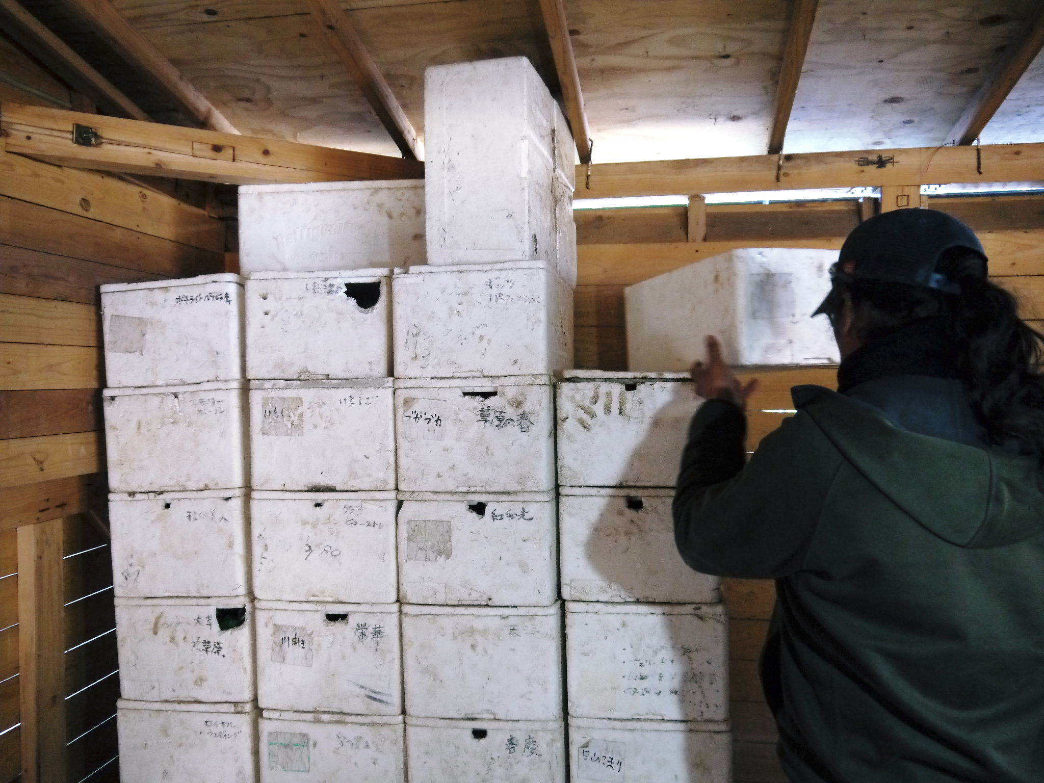 令和2年の『ダリアの球根』販売スタート!!独占販売や希少品種のまずは確実に芽吹く球根の17品種を販売開始!_a0254656_16504199.jpg