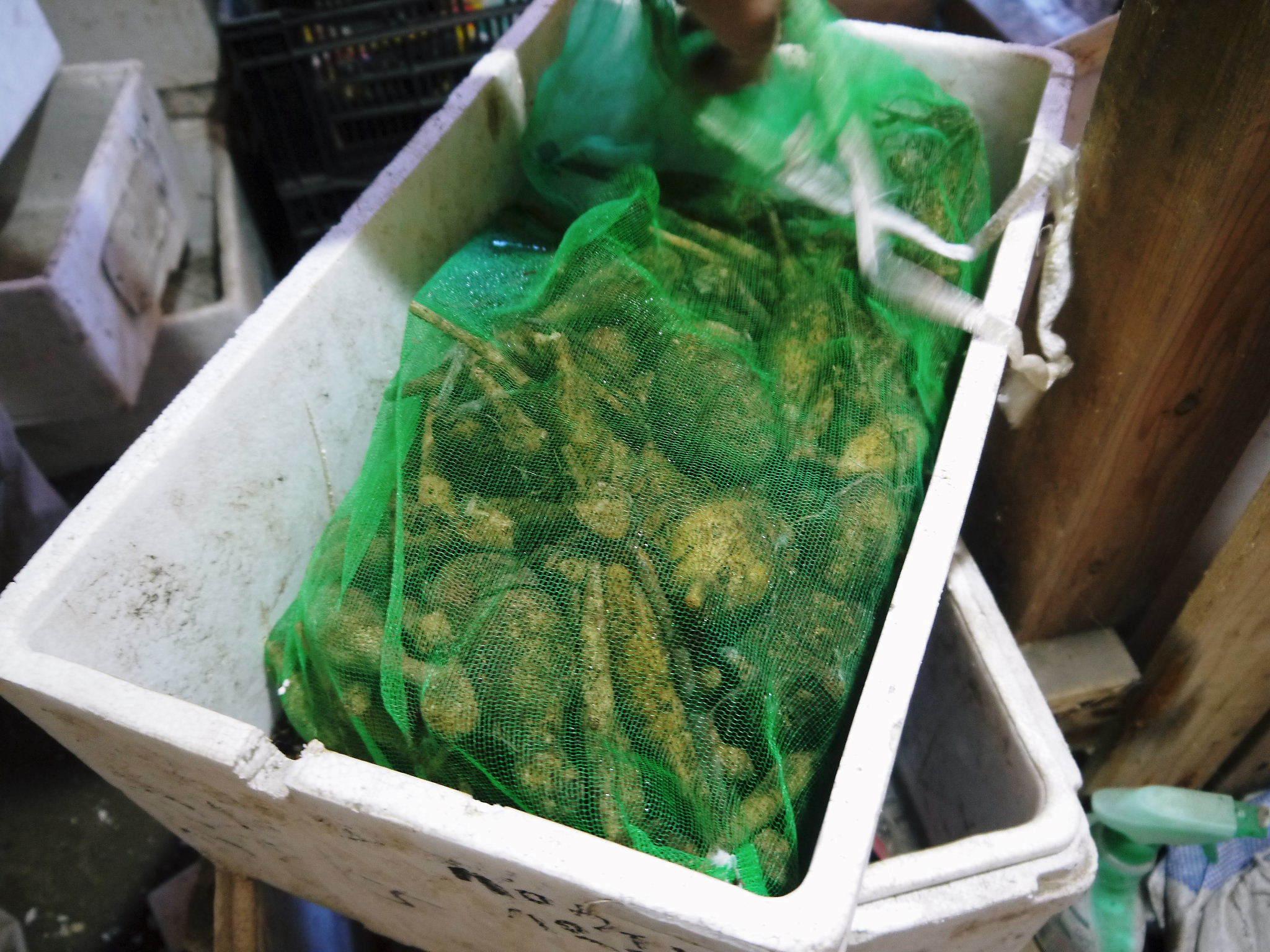 令和2年の『ダリアの球根』販売スタート!!独占販売や希少品種のまずは確実に芽吹く球根の17品種を販売開始!_a0254656_16574098.jpg