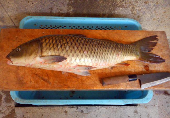 鯉の甘露煮を作る。_c0081499_18343955.jpg