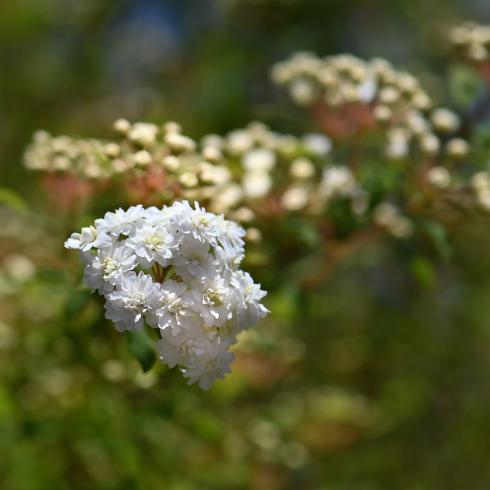 春がきた_f0099102_14553549.jpg