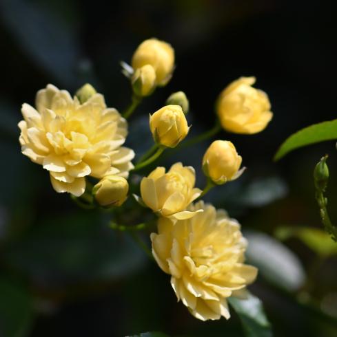 春がきた_f0099102_14563244.jpg
