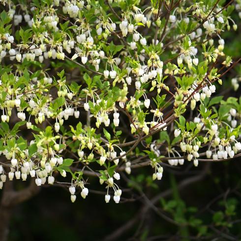 春がきた_f0099102_14564297.jpg