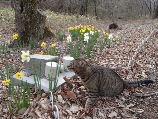 猫と庭散歩_f0064906_14520805.jpg