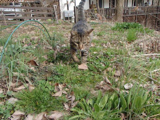 猫と庭散歩_f0064906_14521363.jpg