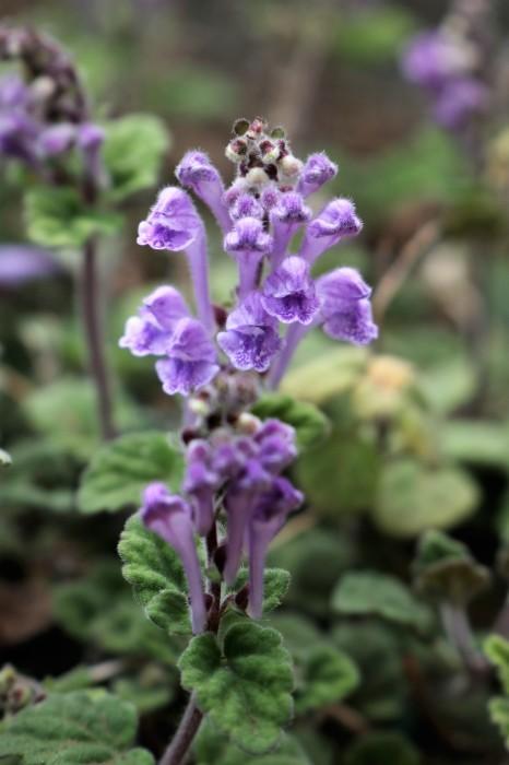 庭の花たち_d0150720_09551268.jpg
