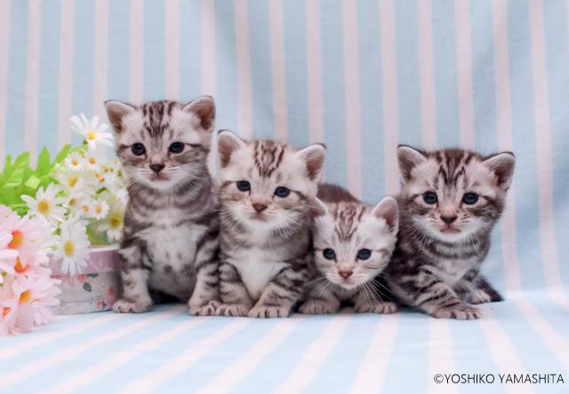 4匹兄弟。。。_f0031022_22442222.jpg