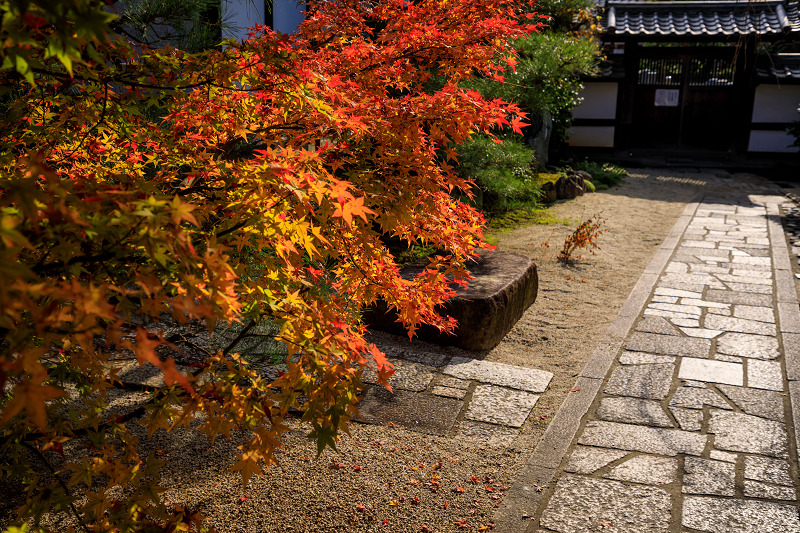 紅葉が彩る京都2019 大好きなお庭の秋景色(光明院)_f0155048_21412821.jpg