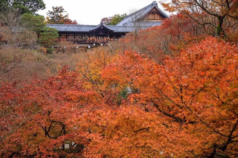紅葉が彩る京都2019 大好きなお庭の秋景色(光明院)_f0155048_21454847.jpg