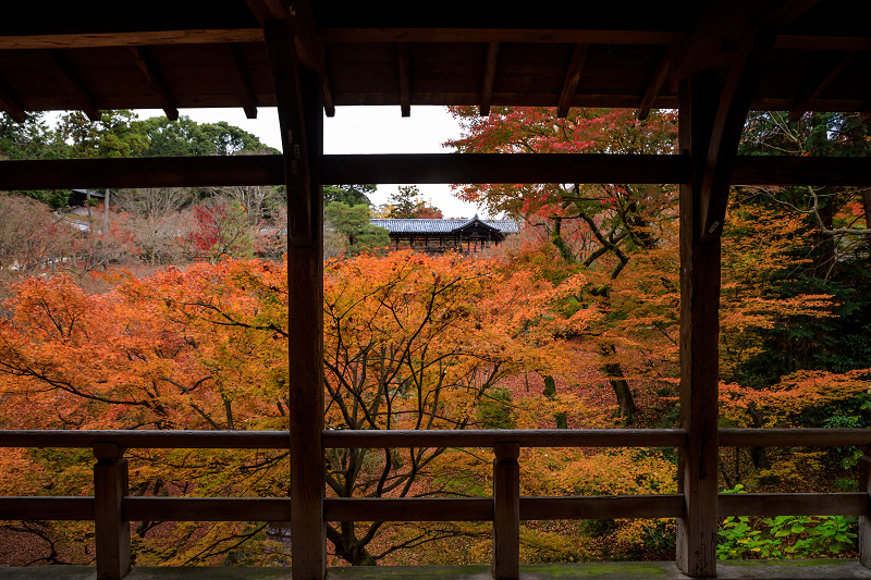 紅葉が彩る京都2019 大好きなお庭の秋景色(光明院)_f0155048_21455218.jpg