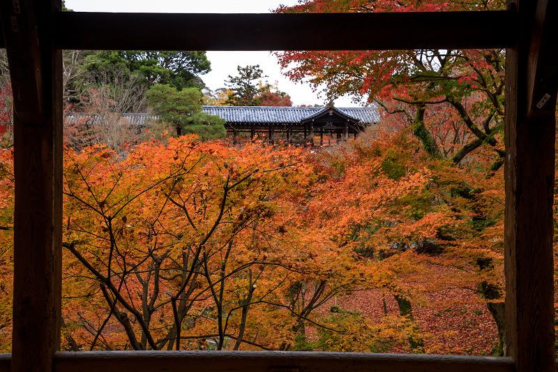 紅葉が彩る京都2019 大好きなお庭の秋景色(光明院)_f0155048_21455930.jpg