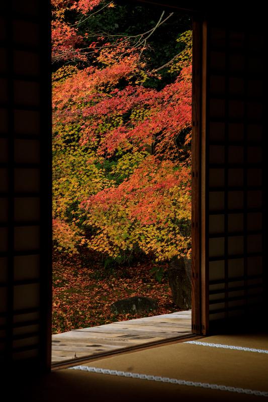 紅葉が彩る京都2019 大好きなお庭の秋景色(光明院)_f0155048_21561421.jpg