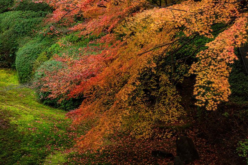 紅葉が彩る京都2019 大好きなお庭の秋景色(光明院)_f0155048_21572975.jpg