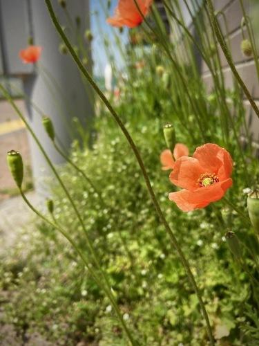 進む春、僕らも進む_e0071652_09030796.jpeg
