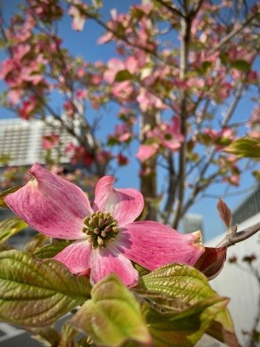 進む春、僕らも進む_e0071652_09031879.jpeg