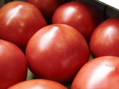 樹上完熟の朝採りトマト 令和2年度の出荷に向け、元気に育つ定植後の様子を現地取材_a0254656_16403670.jpg