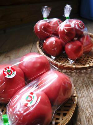 樹上完熟の朝採りトマト 令和2年度の出荷に向け、元気に育つ定植後の様子を現地取材_a0254656_18024537.jpg