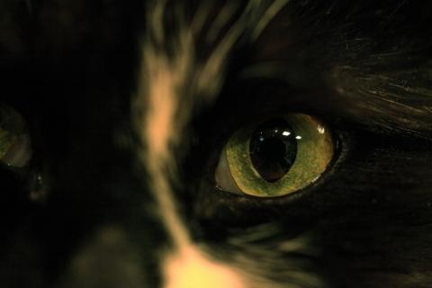 「山寺の和尚さん」の猫トイウモノ_f0075075_09354858.jpg