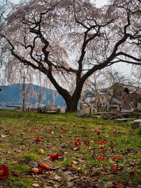3月22日 出遅れた岩屋寺と まだまだな大石神社_a0206577_22215697.jpg