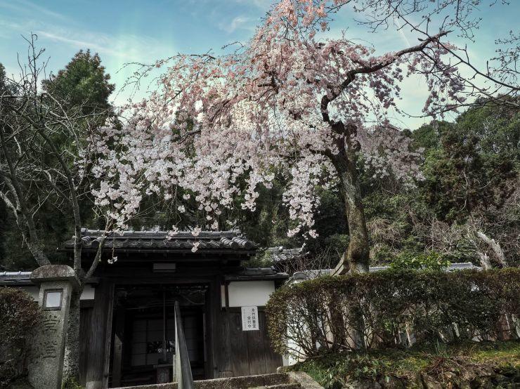 3月22日 出遅れた岩屋寺と まだまだな大石神社_a0206577_22221027.jpg