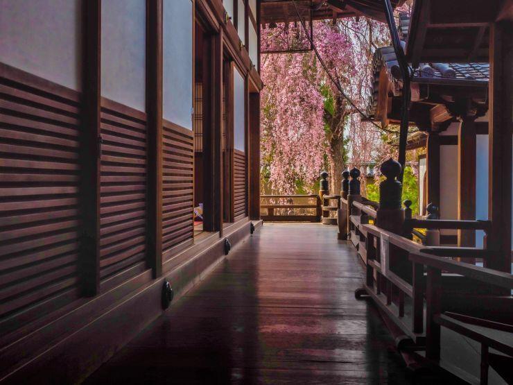 3月22日 高台寺の床さくら_a0206577_22462609.jpg