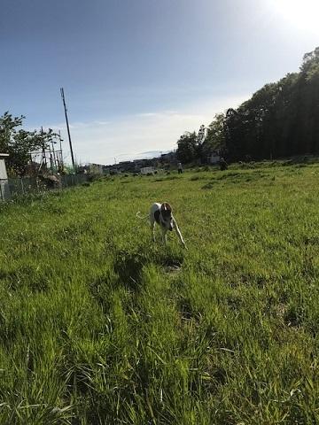 今日も歩行の練習に♪_f0242002_16485973.jpg