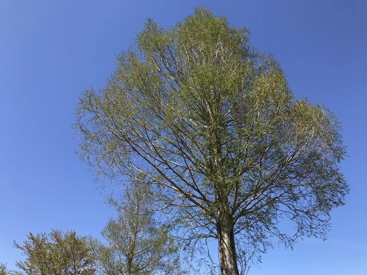 新緑の季節ですね!_c0212604_6533071.jpg