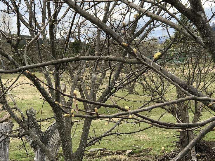 新緑の季節ですね!_c0212604_6542246.jpg