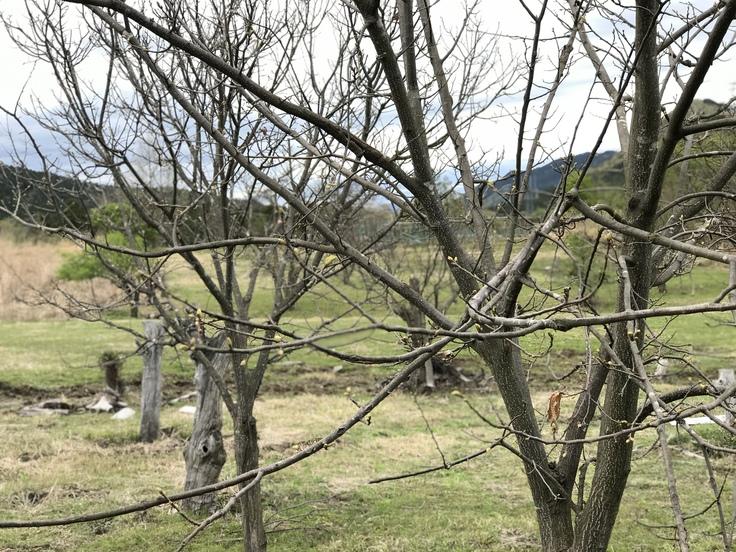 新緑の季節ですね!_c0212604_654230.jpg